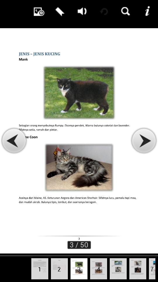 Memandikan Anak Kucing : memandikan, kucing, Merawat, Kucing, Selsema