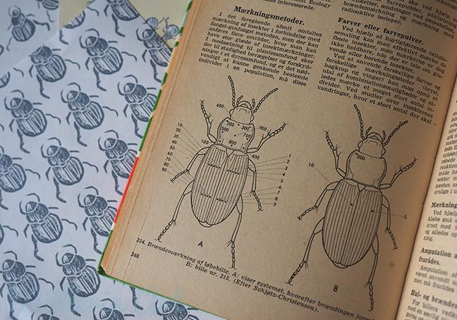 Insektenmuster ©muellerinart