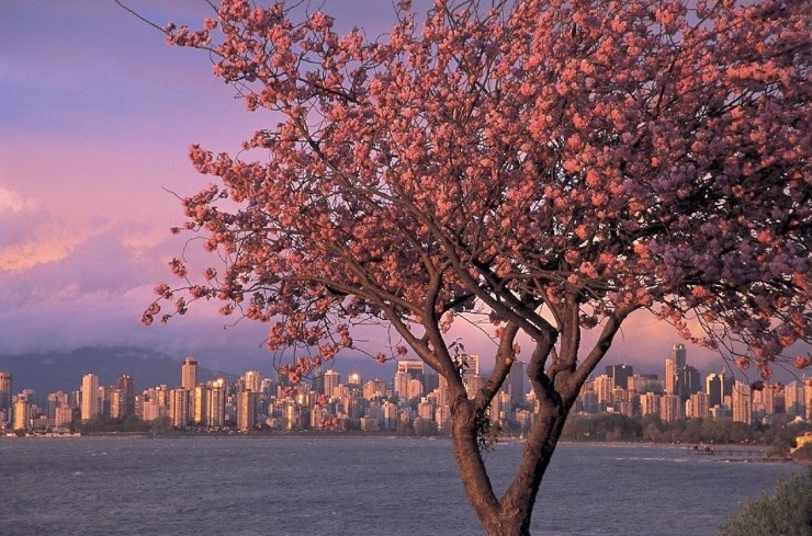 5. Vancouver, Canada - Top 10 Blooming Cities in Spring