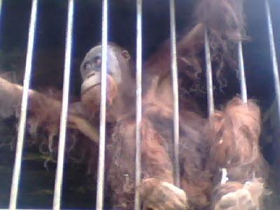 kebun binatang curugsewu | wonderful indonesia