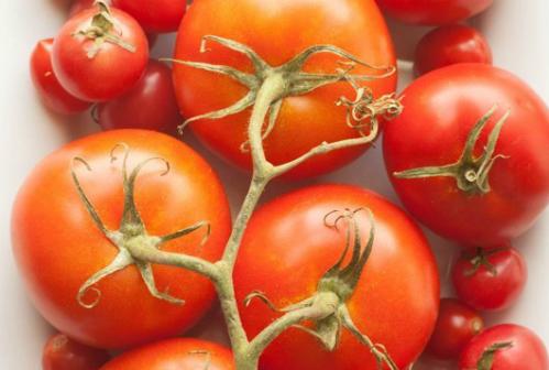 Mẹo vặt để giữ cà chua được lâu hơn trong tủ lạnh