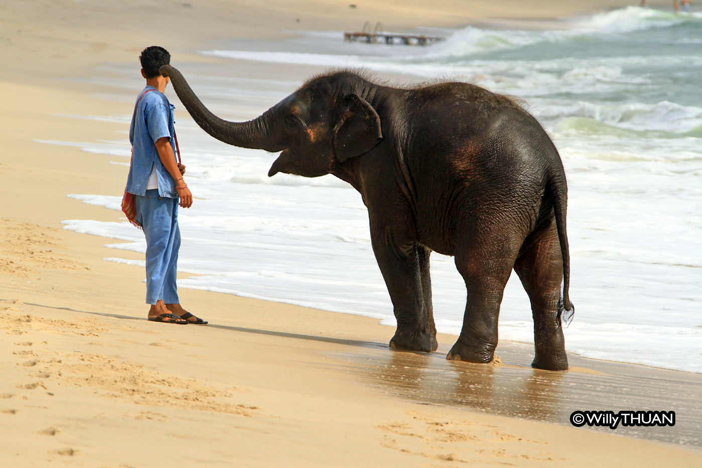 baby elephant playing on the beach  the real story behind