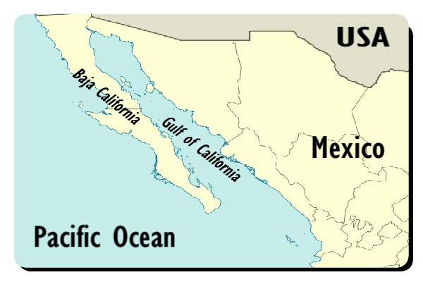 Gulf Of California Map.Gulf Of California Or Sea Of Cortez Facts The Nature S Aquarium