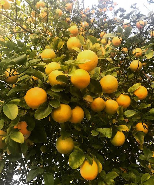 Cuka Apel Dengan Lemon untuk wajah