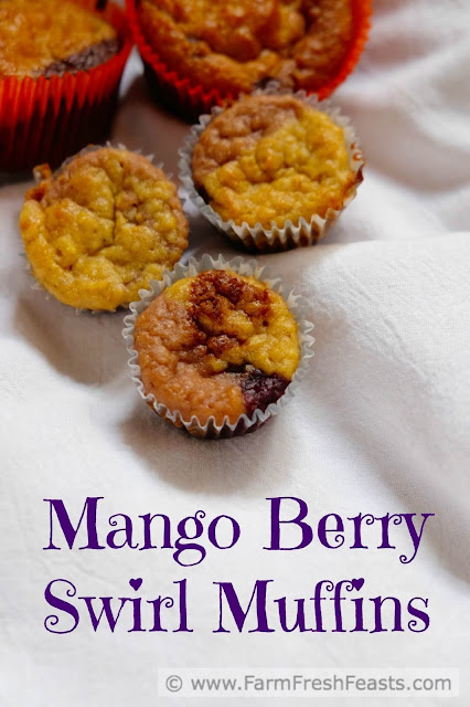 Recipe for a multicolored muffin swirled with mango, strawberry, raspberry and blueberry purees. This whole grain treat makes a large batch, great for bake sales and sharing.