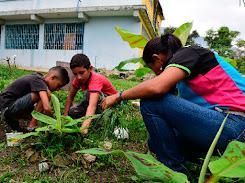 Promueven la siembra en los colegios de todo el país