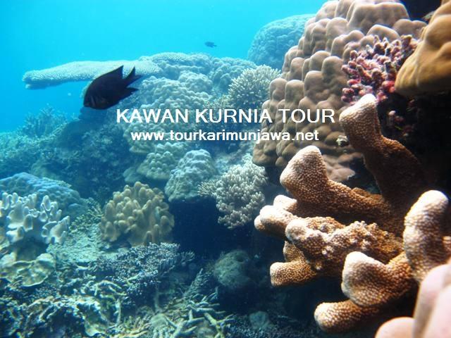 terumbu karang di karimunjawa
