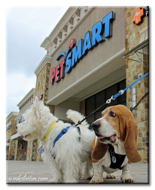 Pierre Westie and Bentley Basset standing outside of PetSmart
