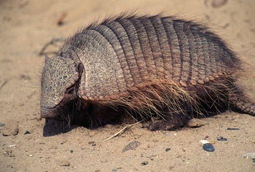 7 Hewan yang Paling Ditakuti Ular di Alam Liar | VeroMons
