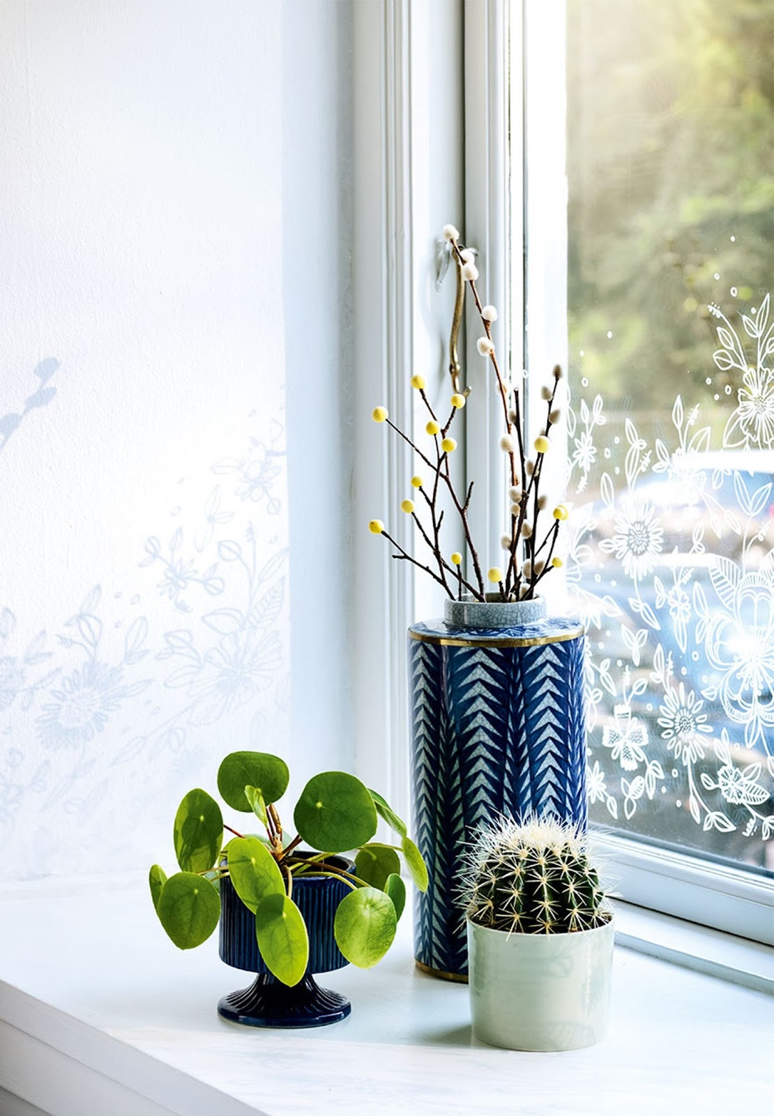 window plants, cactus, planter