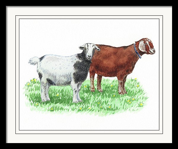 watercolour artwork of two goats on the grass