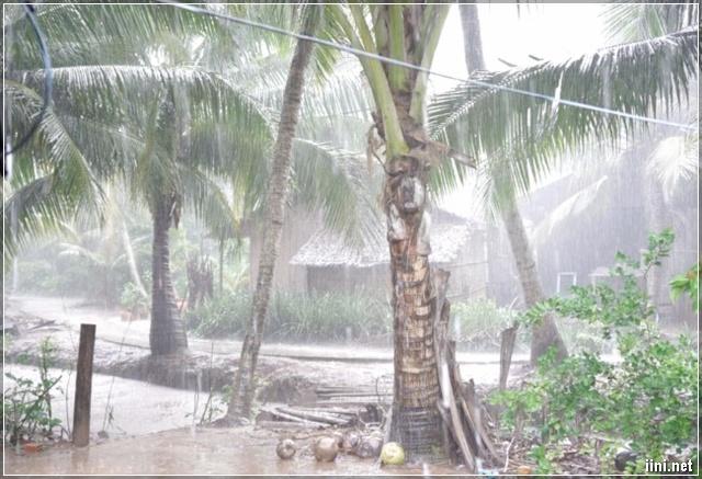 mưa ở vùng quê nông thôn
