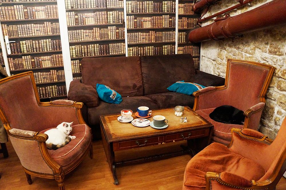 avis café des chats