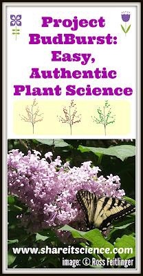 Project BudBurst: Easy, Authentic Plant Science citizen science