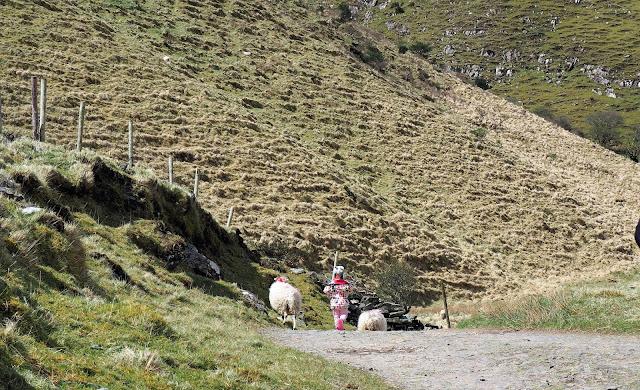 lammas, pallotakki