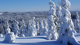 Snow in the wood, Winter HD Wallpapers for Desktop 1080p free download