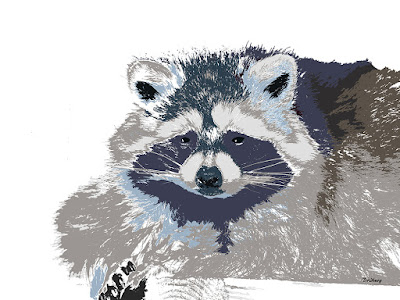 Animal Animals Print Prints Raccoon Raccoons