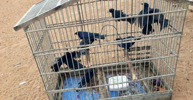 Ibama e Polícia Militar apreendem 4 mil animais silvestres em cativeiro
