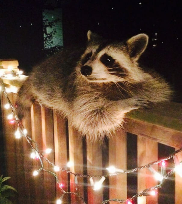 40 Heartwarming Pictures Of Animals - Over Time This Handsome Guy Became Very Comfortable In My Friend's Backyard