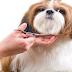 Cut Dog Hair at Home