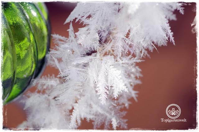 Gartenblog Topfgartenwelt Impressionen Raureif: Frost im Garten Winter Winterzeit Kälte
