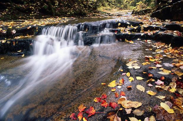 Waterfall Autumn Fall Leaves