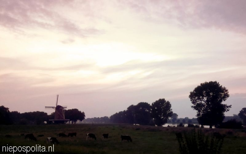 NIEPOSPOLITA.NL