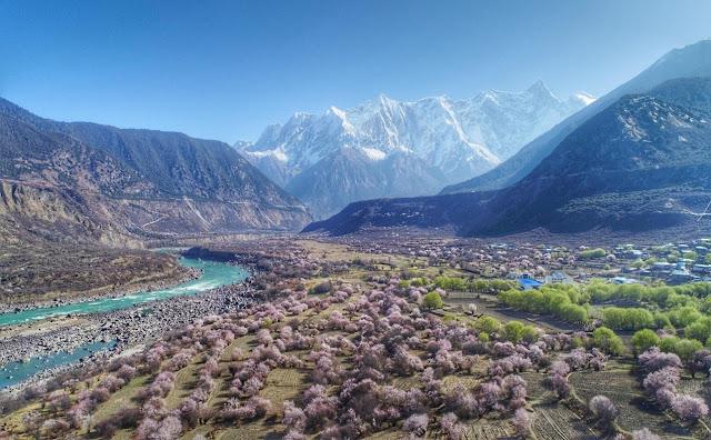西藏林芝桃花