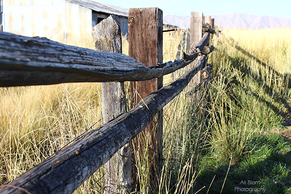 sunny autumn morning split rail fence farm