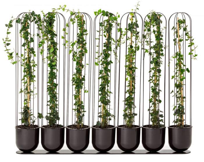 Cactus ornamentali per interni ed esterni