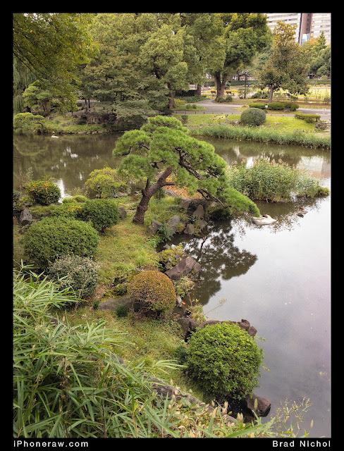 Hibiyakoen, park, Tokyo, Japan, pond and manicured trees. looking down.