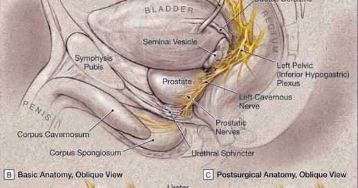 Brady Urology at Johns Hopkins Hospital: A Strategic ...