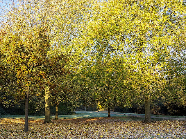 Oak and maple trees turning yellow