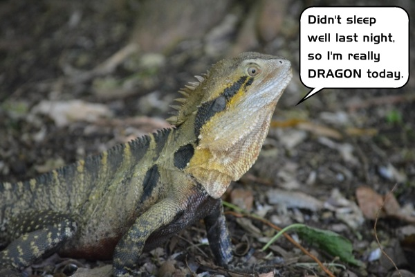 Sleep is very important to people as well as many creatures. A study of sleep patterns in the bearded dragon lizard leads to some wild evolutionary speculations.