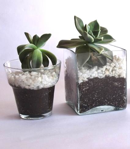 Decorative Clear Glass Plant Pots 5