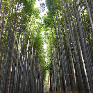The towering bamboo forest