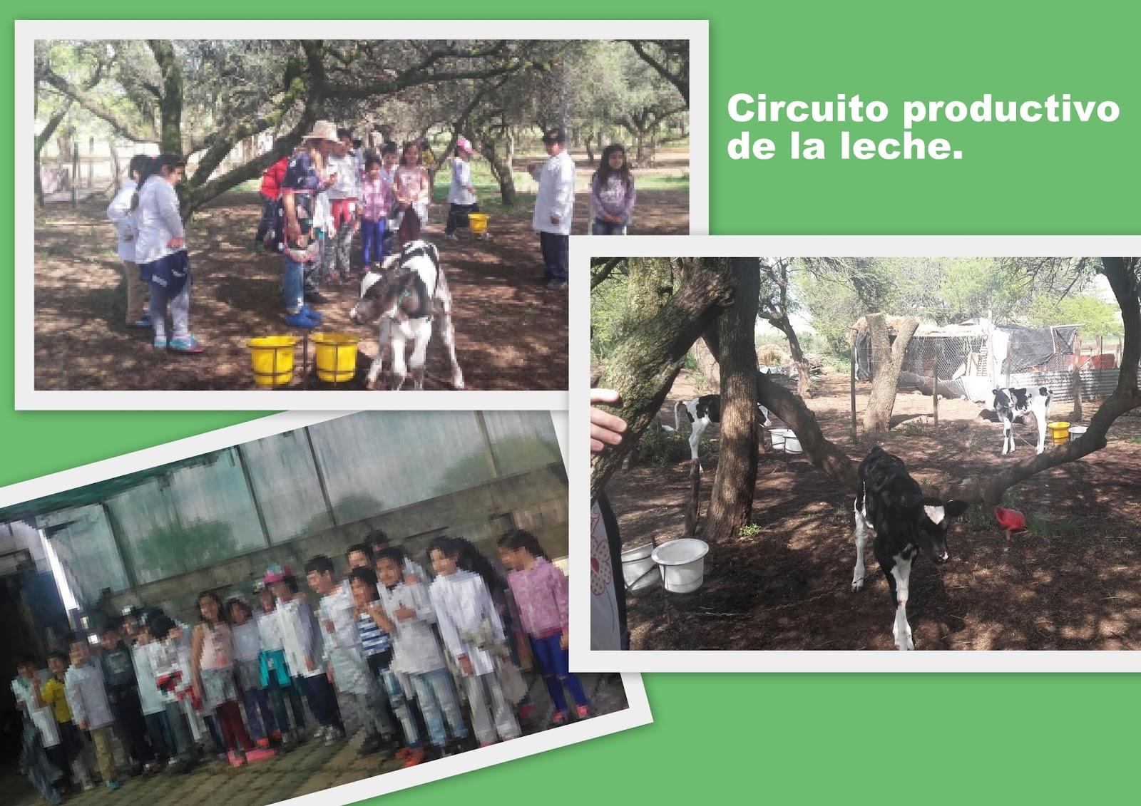 Circuito Productivo De La Leche : Circuitos productivos de argentina