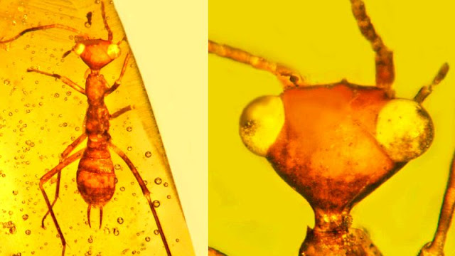 'Alien' insect in amber from 100 million years ago