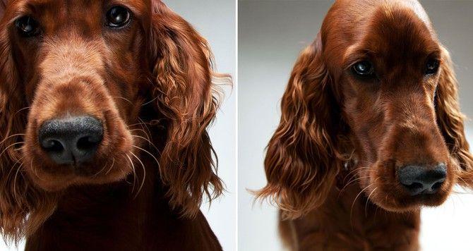 foto en estudio de perro