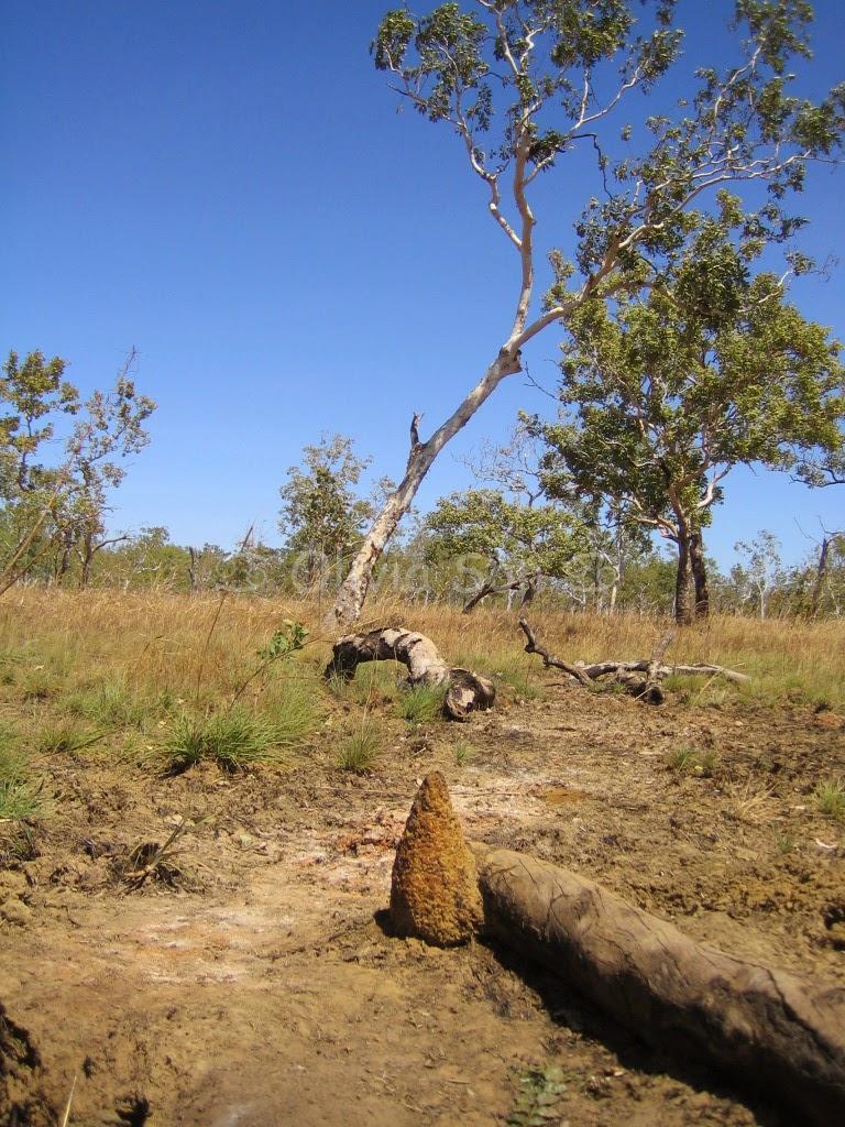 Termite Mount, Kakadu National Park, Northern Territory, Australie