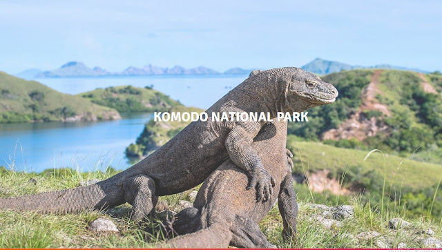 Menjelajah Pulau Komodo Yang Eksotis