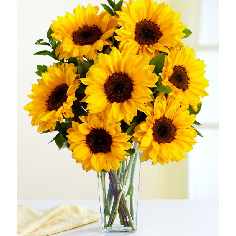 imagenes de flores bonitas | fondos de pantalla