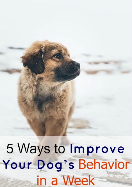 5 Ways to Improve Your Dog's Behavior in a Week