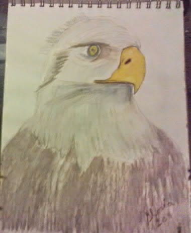 Watercolor pencil drawing of eagle by Gloria Poole