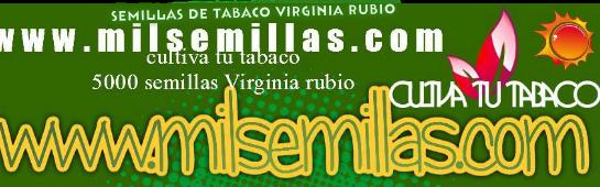 Tu tienda online compra tus semillas de calidad de tabaco virginia Rubio