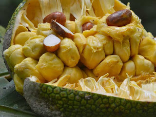 cempedak fruit images