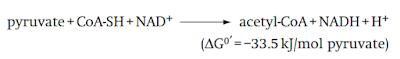 dekarboksilasi oksidatif sebelum siklus krebs