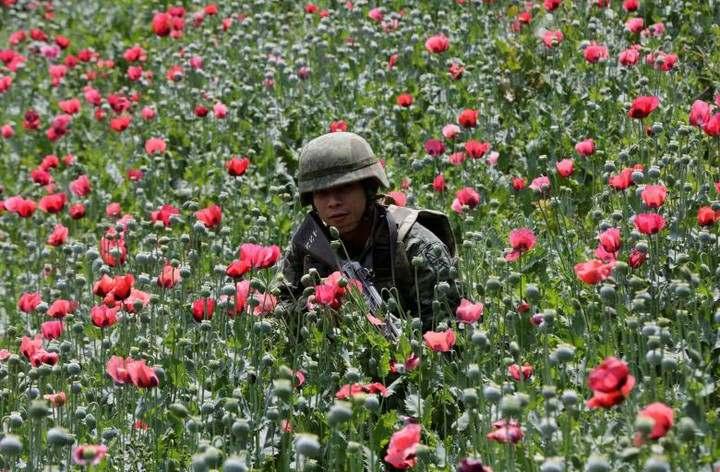 Thực chất cuộc chiến chống thuốc phiện của Mỹ ở Afghanistan