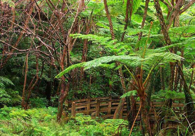 Ferns, vegetation, bridge