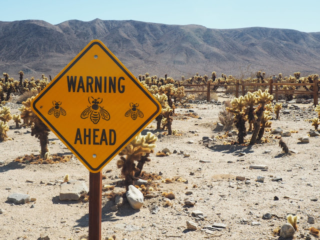Bee warning sign in Joshua Tree National Park, California